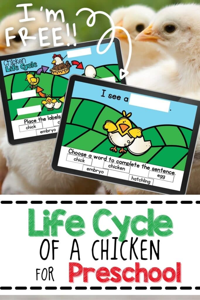 Free Chicken Life Cycle Digital Activity