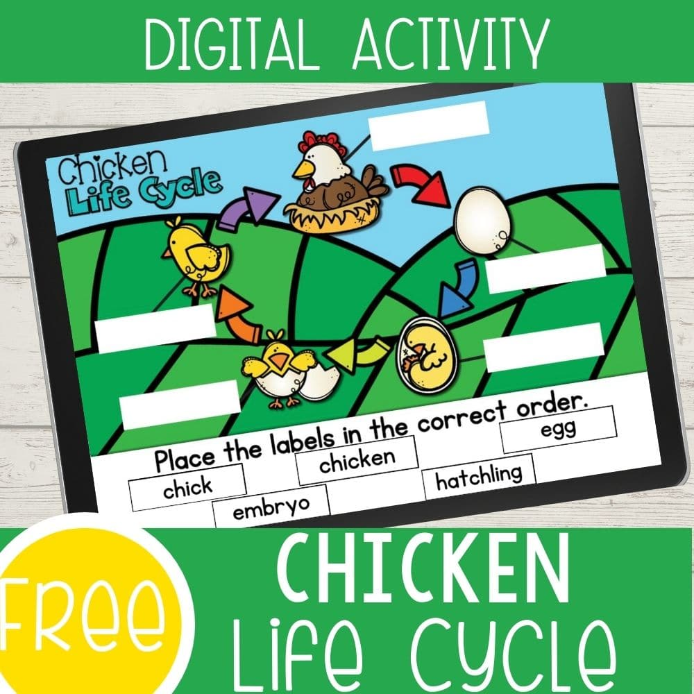 Free Chicken Life Cycle Featured Square Image