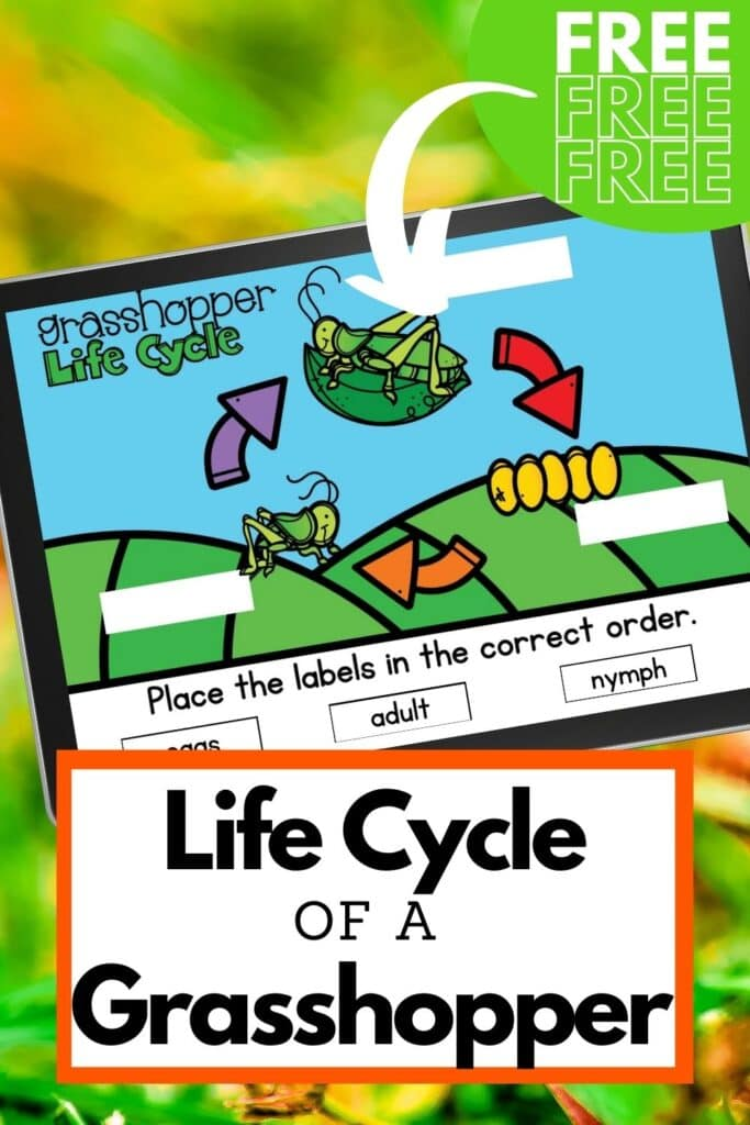 Life Cycle of a Grasshopper Free Activity