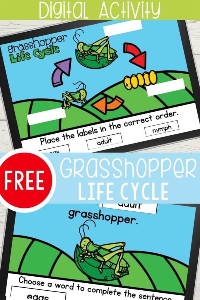 Free Digital Grasshopper Life Cycle Activity