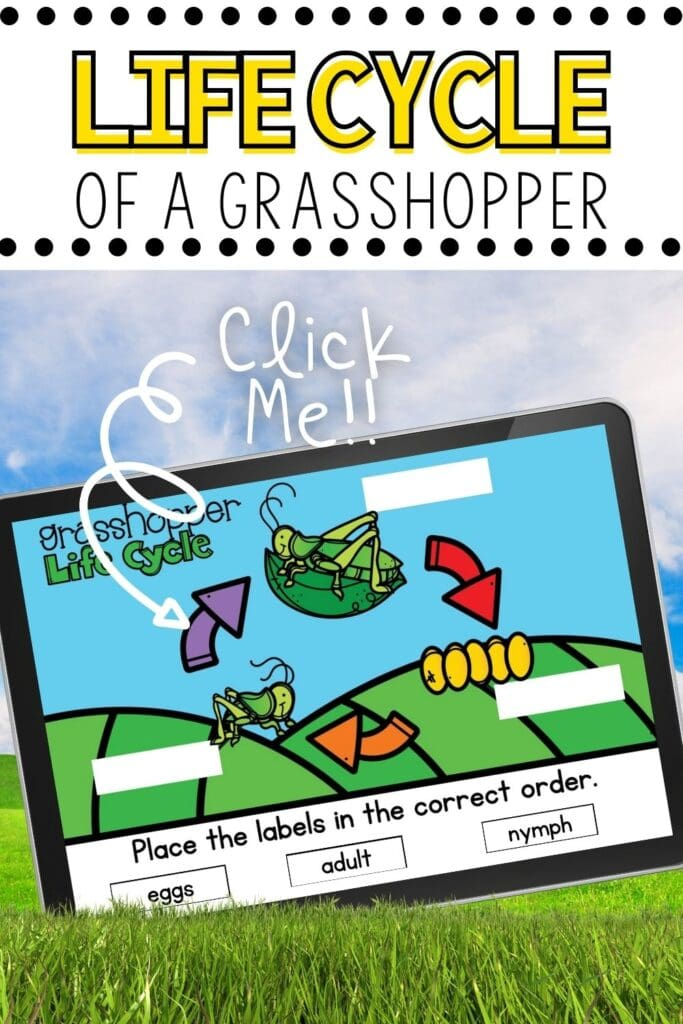 Lifecycle of a Grasshopper Digital Activity