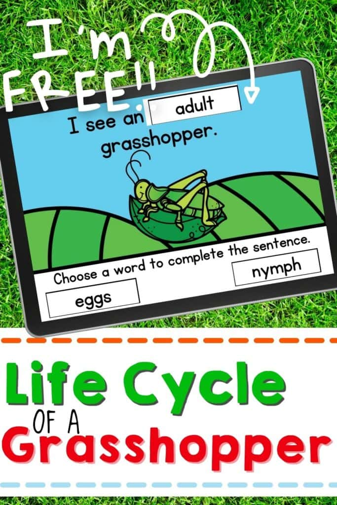 Free Life Cycle of a Grasshopper Digital Activity