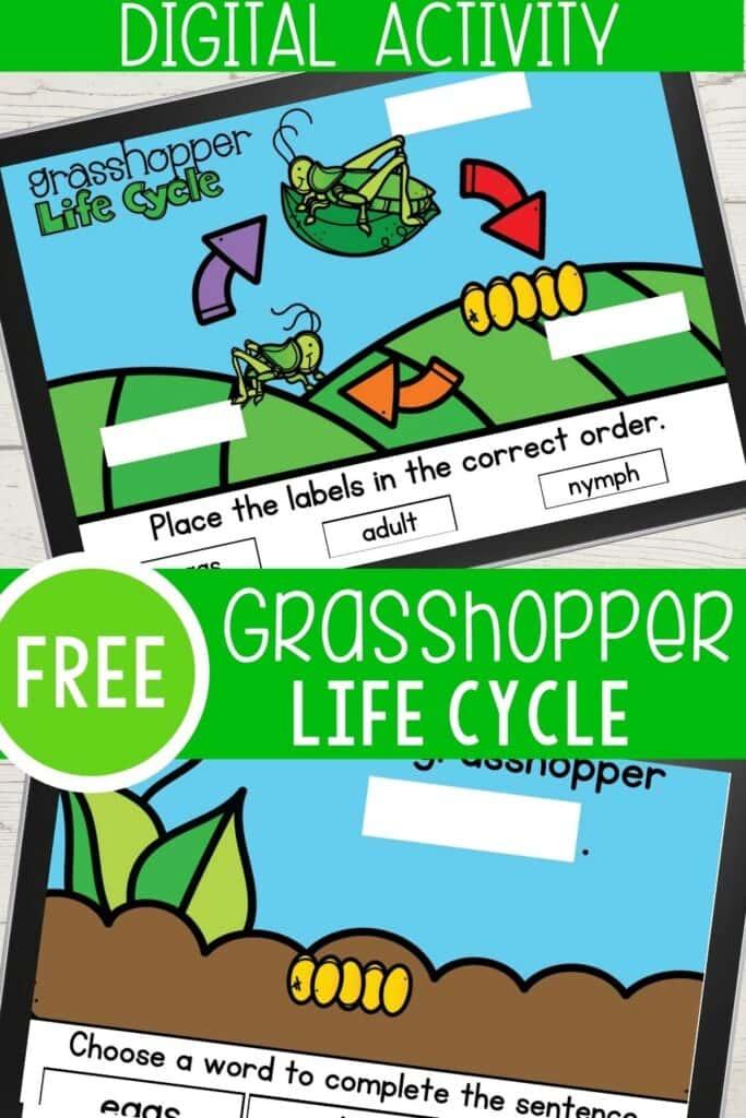 Free Grasshopper Life Cycle Digital Activity
