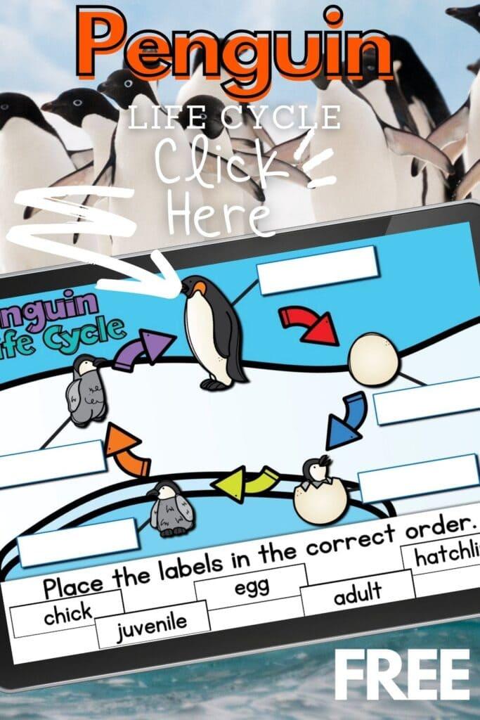 Free Penguin Life Cycle Digital Activity