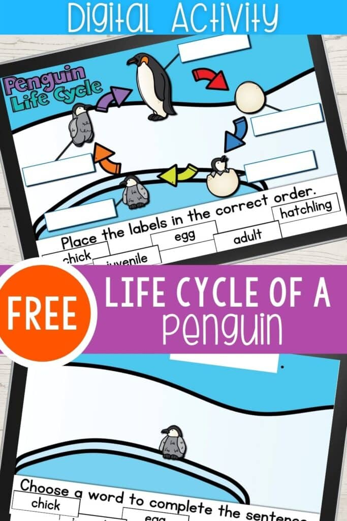 Free Life Cycle of a Penguin Digital Activity