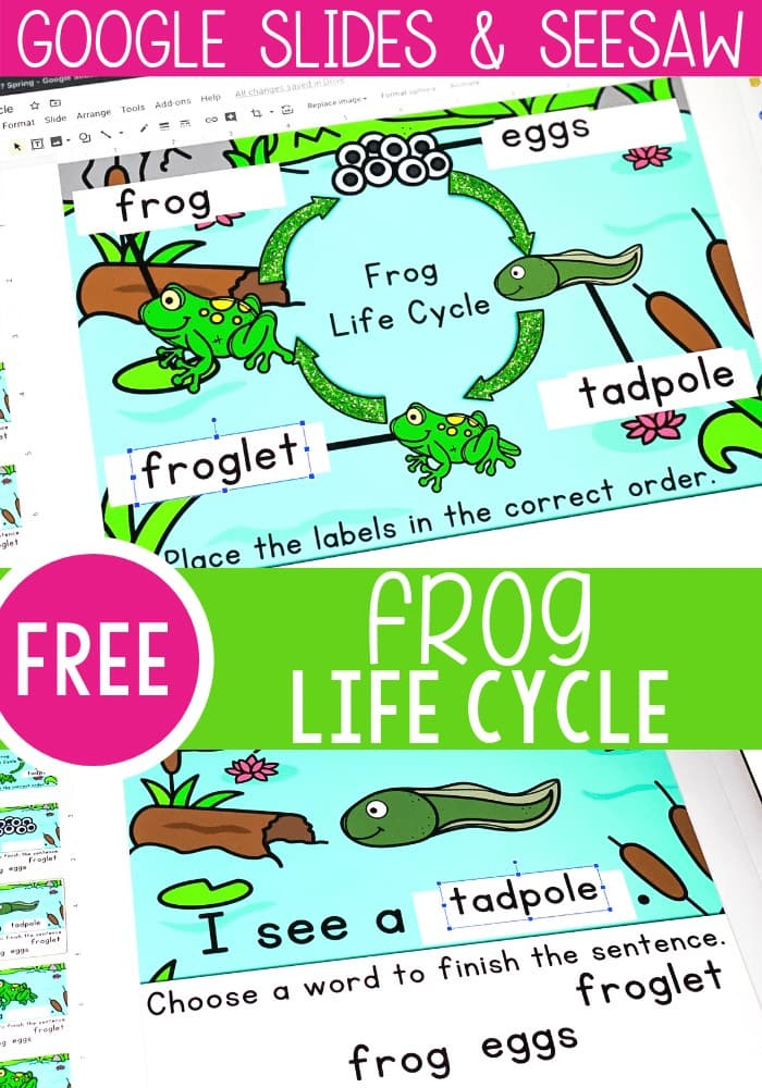 Free Frog Life Cycle activity for kindergarten. Learn the stages of the frog life cycle: eggs, tadpole, froglet, and frog with these simple reading activity for your life cycle science unit.