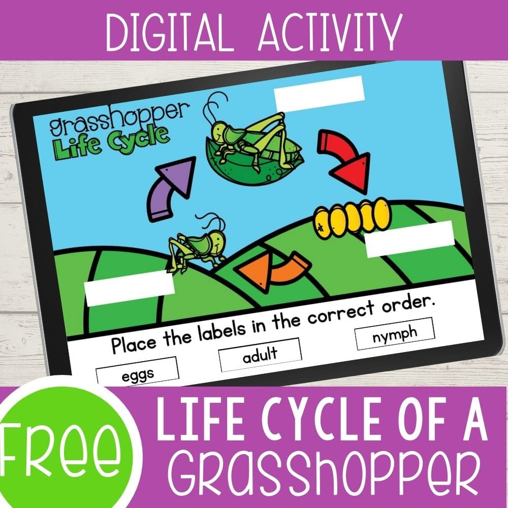 grasshopper life cycle digital square featured image