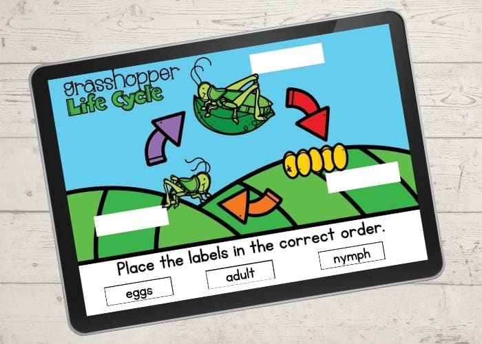 A digital slide overview of a grasshopper life cycle.