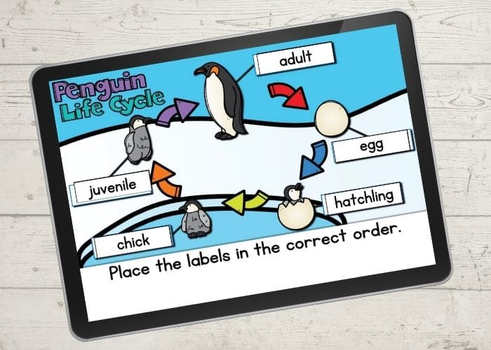 The digital diagram of a life cycle of a penguin activity slide for the life cycle order.