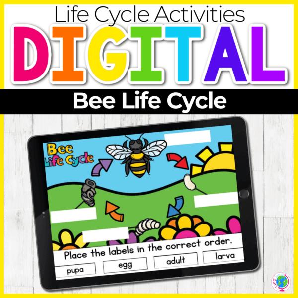 Bee Life Cycle Digital Science Activity