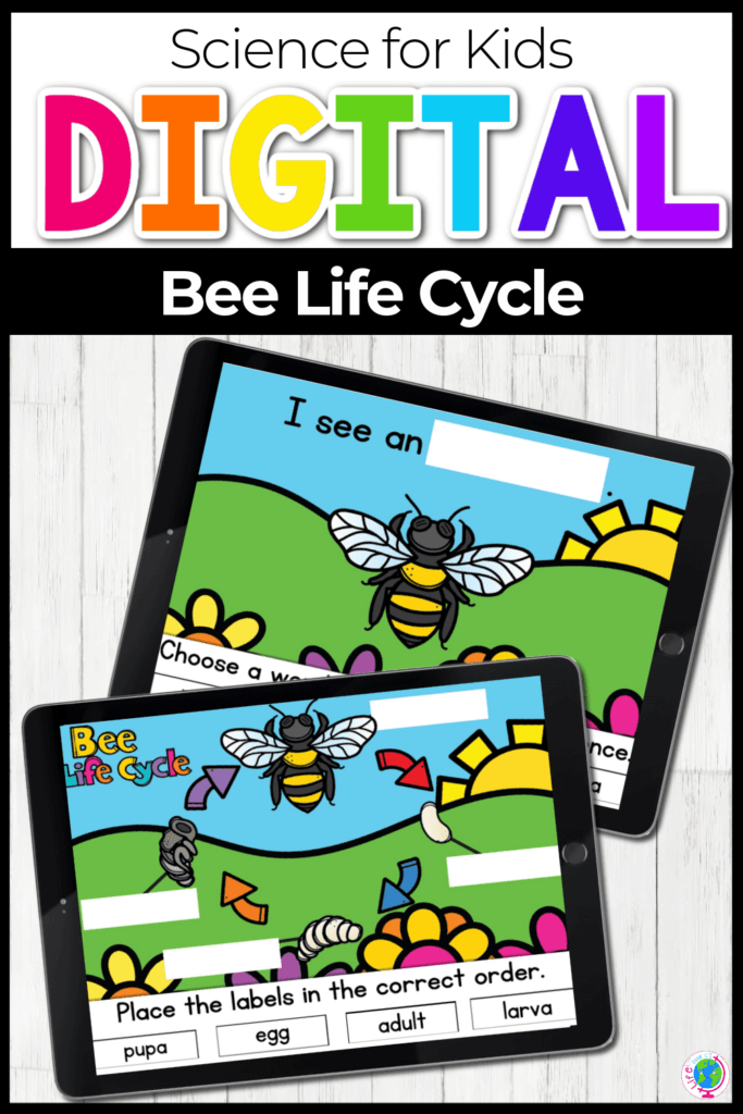 Digital Bee Life Cycle Activity for Kids