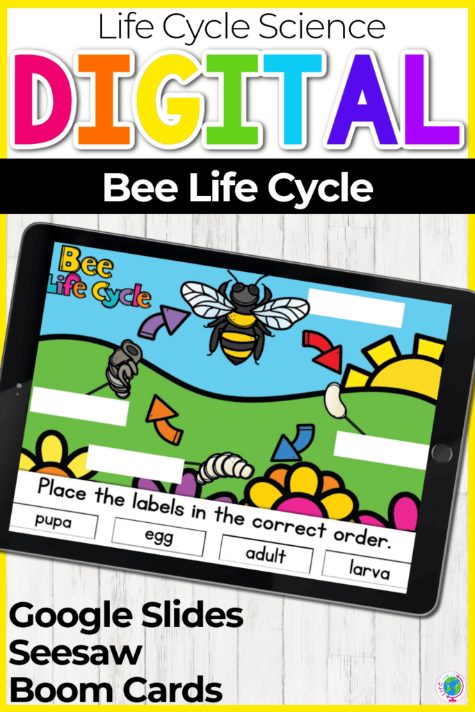 Digital Bee Life Cycle Activity