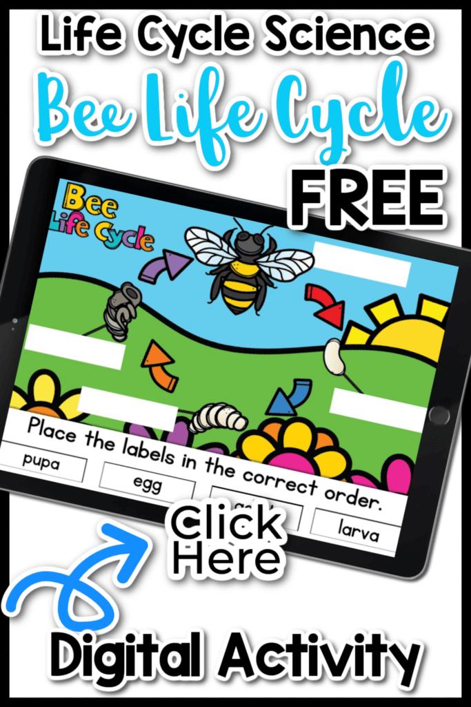 Free Bee Life Cycle Digital Activity