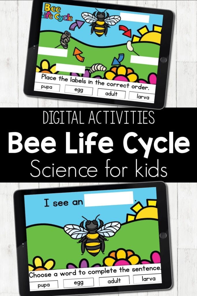 Bee Life Cycle Digital Activities