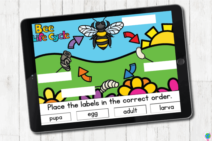 The slide for the full bee lifecycle from the Digital Bee Life Cycle Activities for Kids.