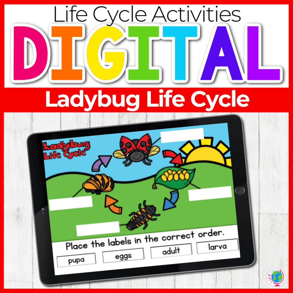 Digital Ladybug Life Cycle Science Activity