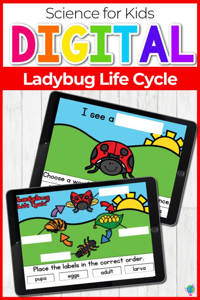 Free Digital Ladybug Life Cycle Activity