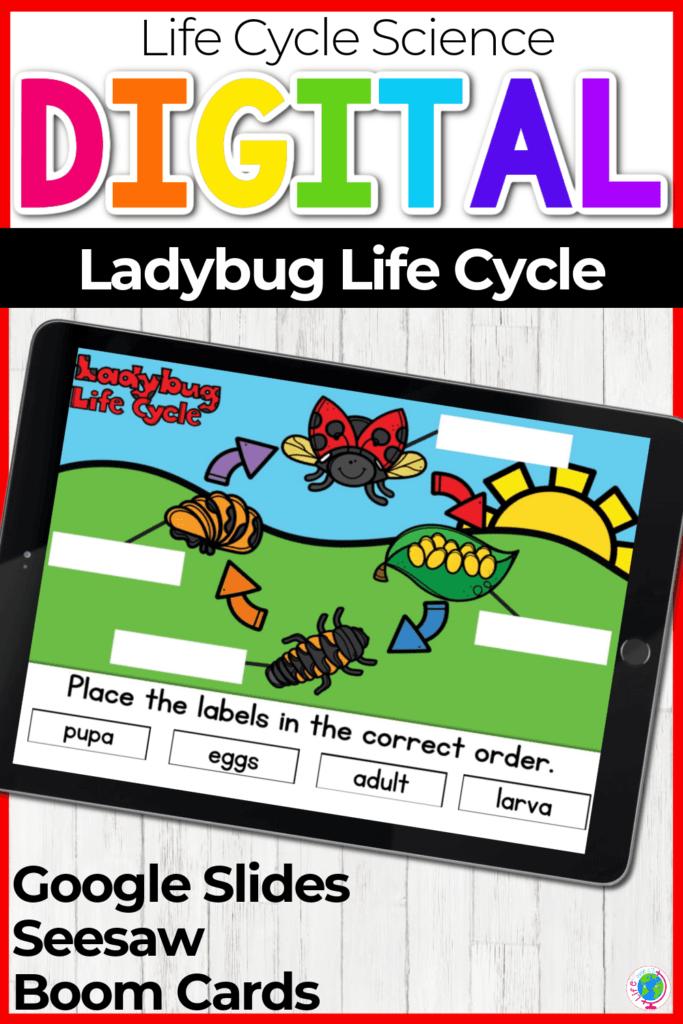 Digital Ladybug Life Cycle Activity