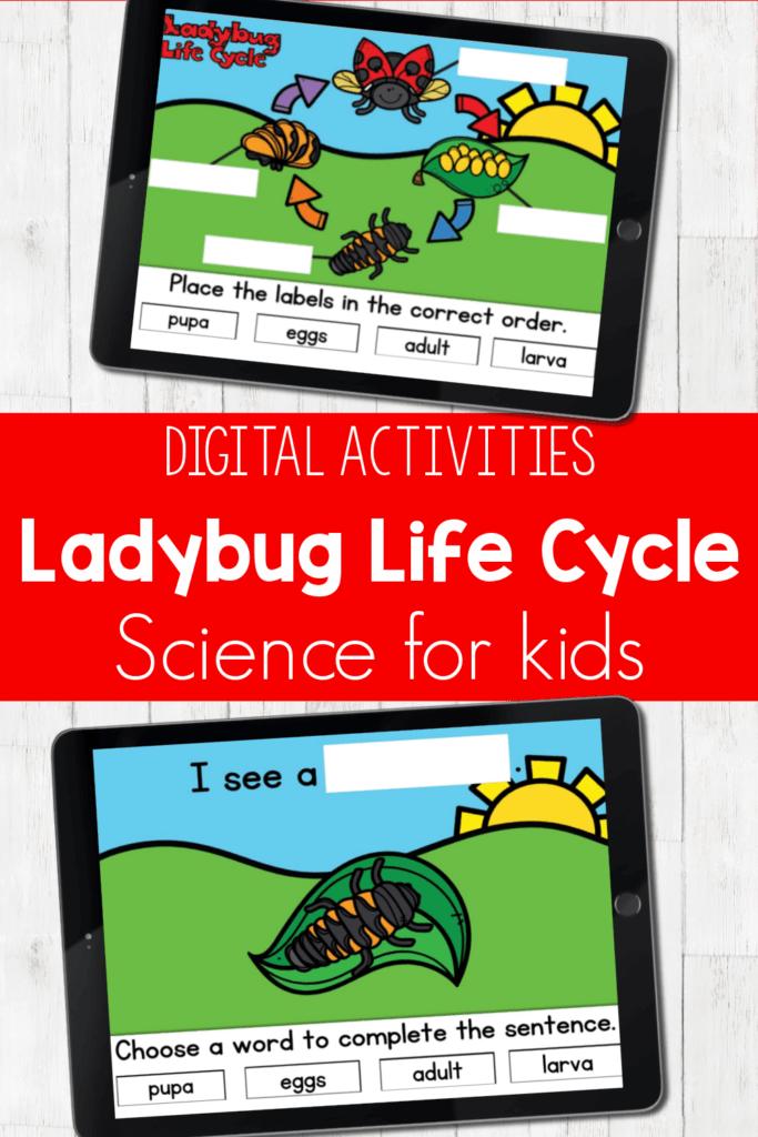 Ladybug Life Cycle Digital Activities